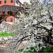 Albero solitario vive sotto un ponte romano un momento di fioritura gioiosa