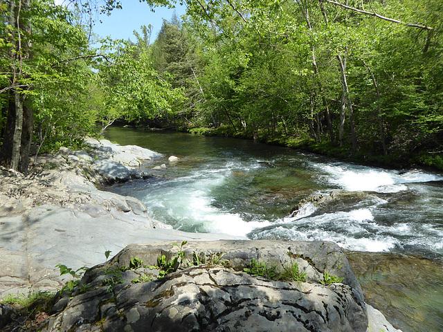 Porter Creek