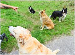 five  dog's