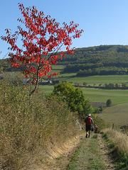 Vers Duerne, Monts du Lyonnais (Rhône)