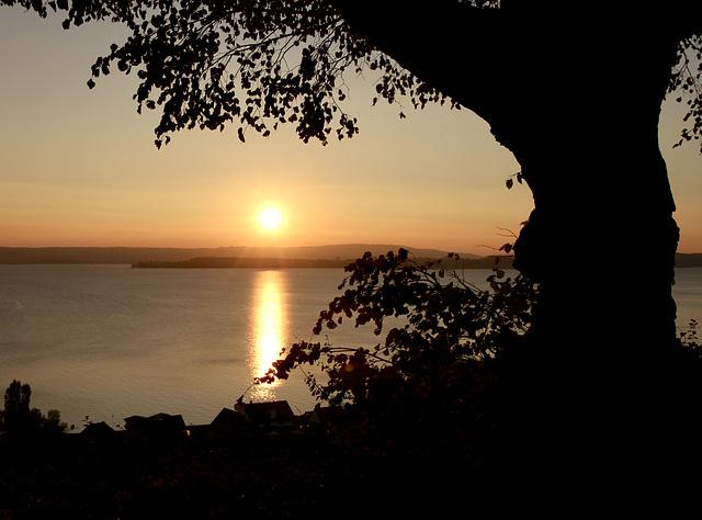 Untergehende Sonne über dem Bodensee