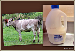 Cow and Milk.