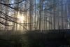 HFF –  Mystic woods fence