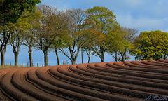 Ploughed field closeup