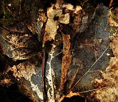 Skellibobbin Leaf 2
