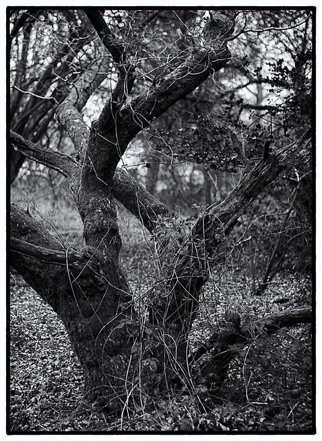 April 07: tree