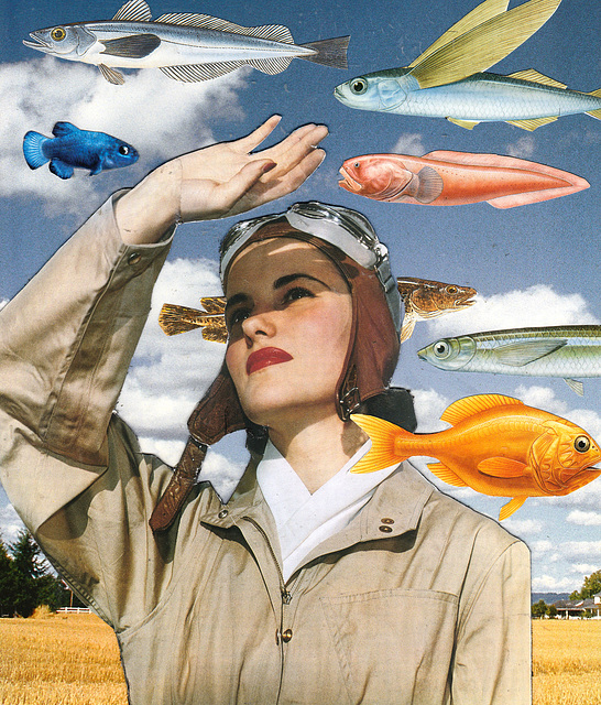 birds gotta swim, fish gotta fly