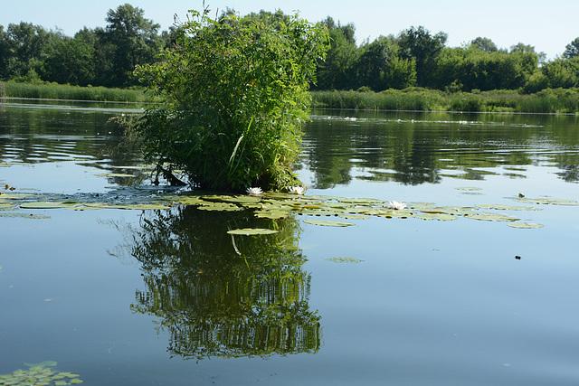 Киев, Ольгин остров на Днепре, Пейзаж с Отражением / Kiev, Olghin Island on the Dnieper, Landscape with Reflection