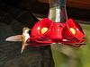 Tiny Hummingbird at Highwood House