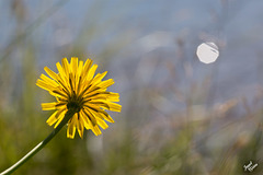 Backlit Beauty and More at Tugman State Park (+6 insets!)