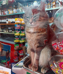 Comment ce beau chat dans la vitrine ? How much that pretty cat in the window