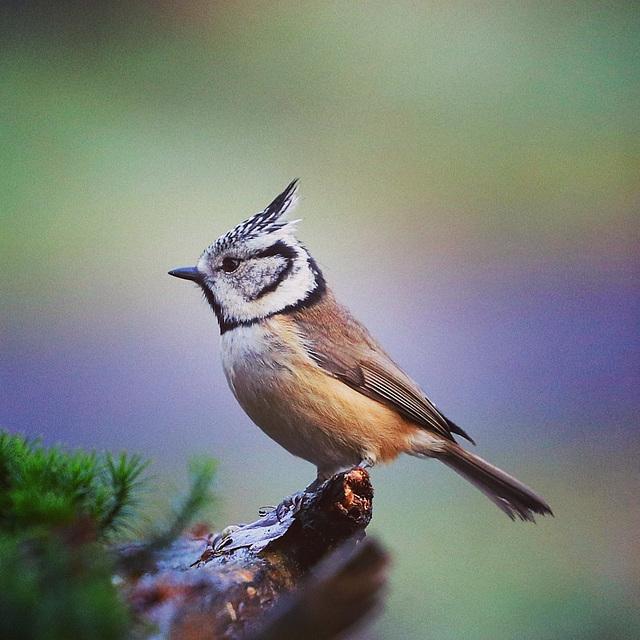Lokbird
