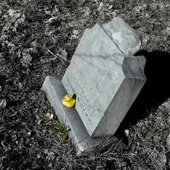 Ralph's yellow duck