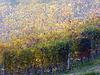 Buon equinozio d'autunno !