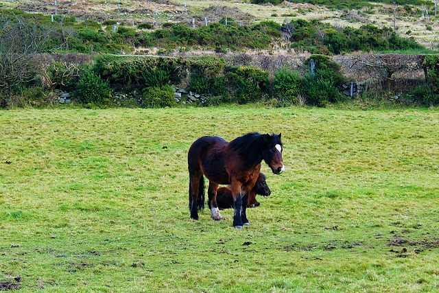 Horses care for one another:)