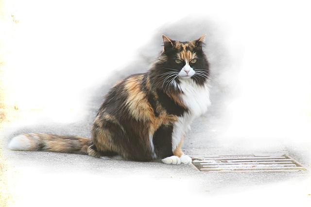Eine Katze aus meinem Ort