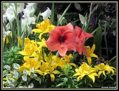 Lilies and Gladioli.