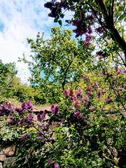 Blick hinauf auf meinen Garten