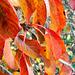Colourful Leaves Of Autumn.