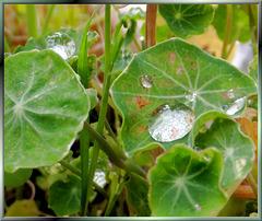 It was raining again... ©UdoSm