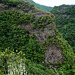 Wo Bäume die Steilwand hochwachsen