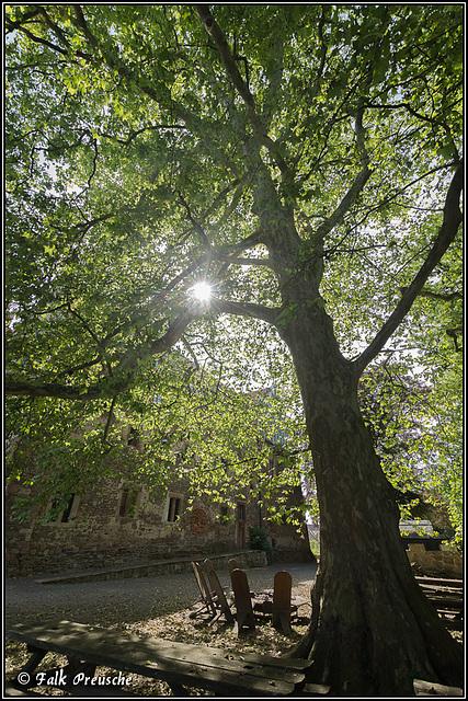 Der große Baum