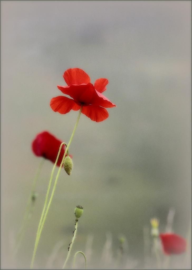 Une fleur par jour.... - Page 11 45596418.1b26b87d.1024