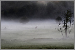 une silhouette dans la brume !!