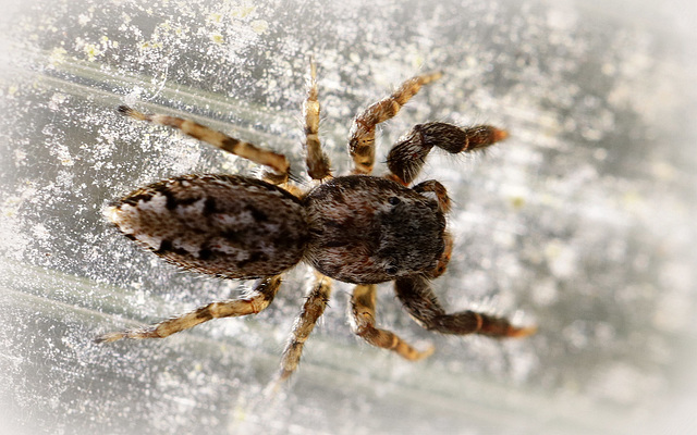les 8 pattes - araignées et compagnie - Page 23 48416418.a964a2ba.640