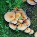 Pilze im Schlosspark