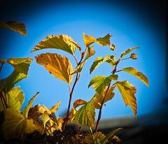 L'automne au Québec...