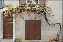 Weinranken an der Fassade
