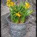 Spring stuck into the zinc pot