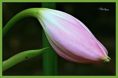 La volupté, comme une fleur rare, demande les soins de la culture la plus ingénieuse
