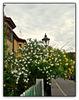 Thelottviertel - Gartenstadt/Garden City