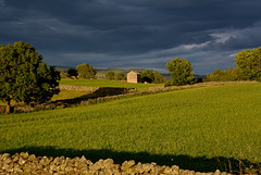 A Teesdale view