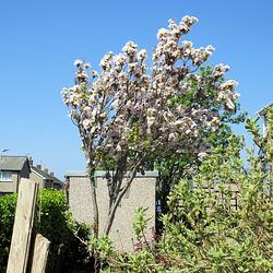 01 blossom