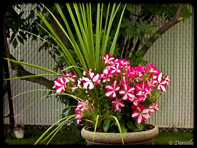 Des fleurs pour vous...