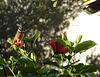 ...ce matin,soleil,vent,la vie normale revient...