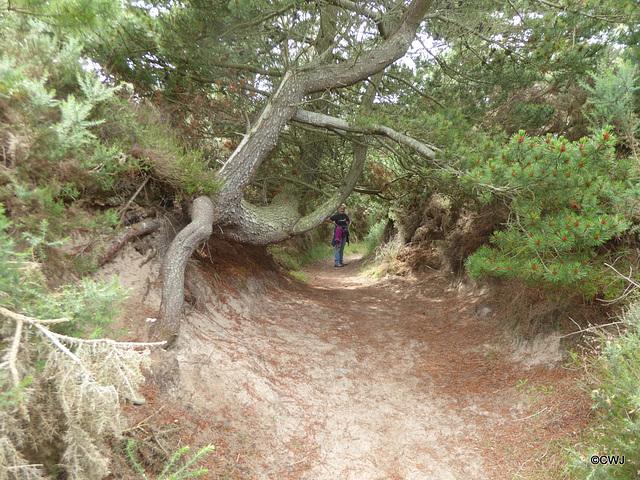 The Findhorn Dunes