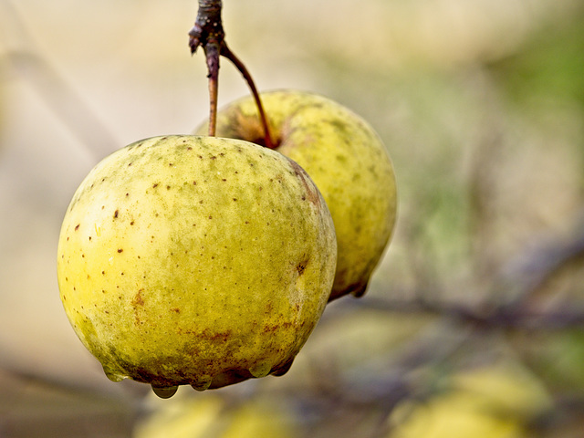 A Pair of Apples