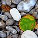 ... automne à la plage ...