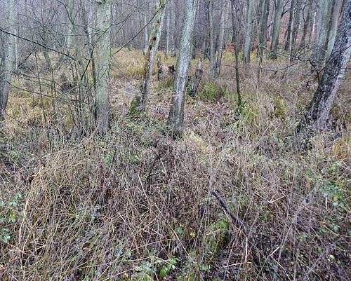 Auwald an der Bille vor Bergedorf // auwald-06050-co-09-12-18