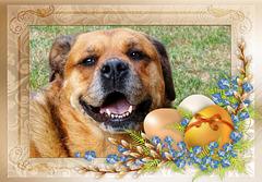 DANA: Joyeuses Pâques ! Happy Easter ! [ON EXPLORE]