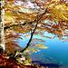 regard sur le lac Pavin...