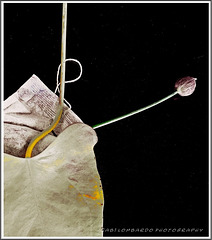 The 50 Images Project - tea bag - 41/50 - flowering bag