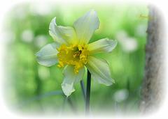 Bonne Journée à tous !!en cette belle journée de printemps !