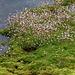 Moos am Hochmoor