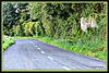 Rural Road.