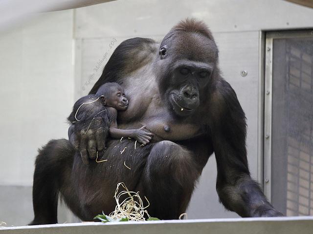 Tuana und ihr Baby (Wilhelma)